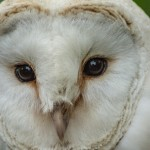 The Medicine and Mythology of Owls