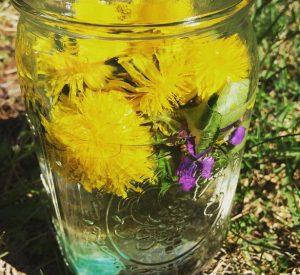 infused-herbs