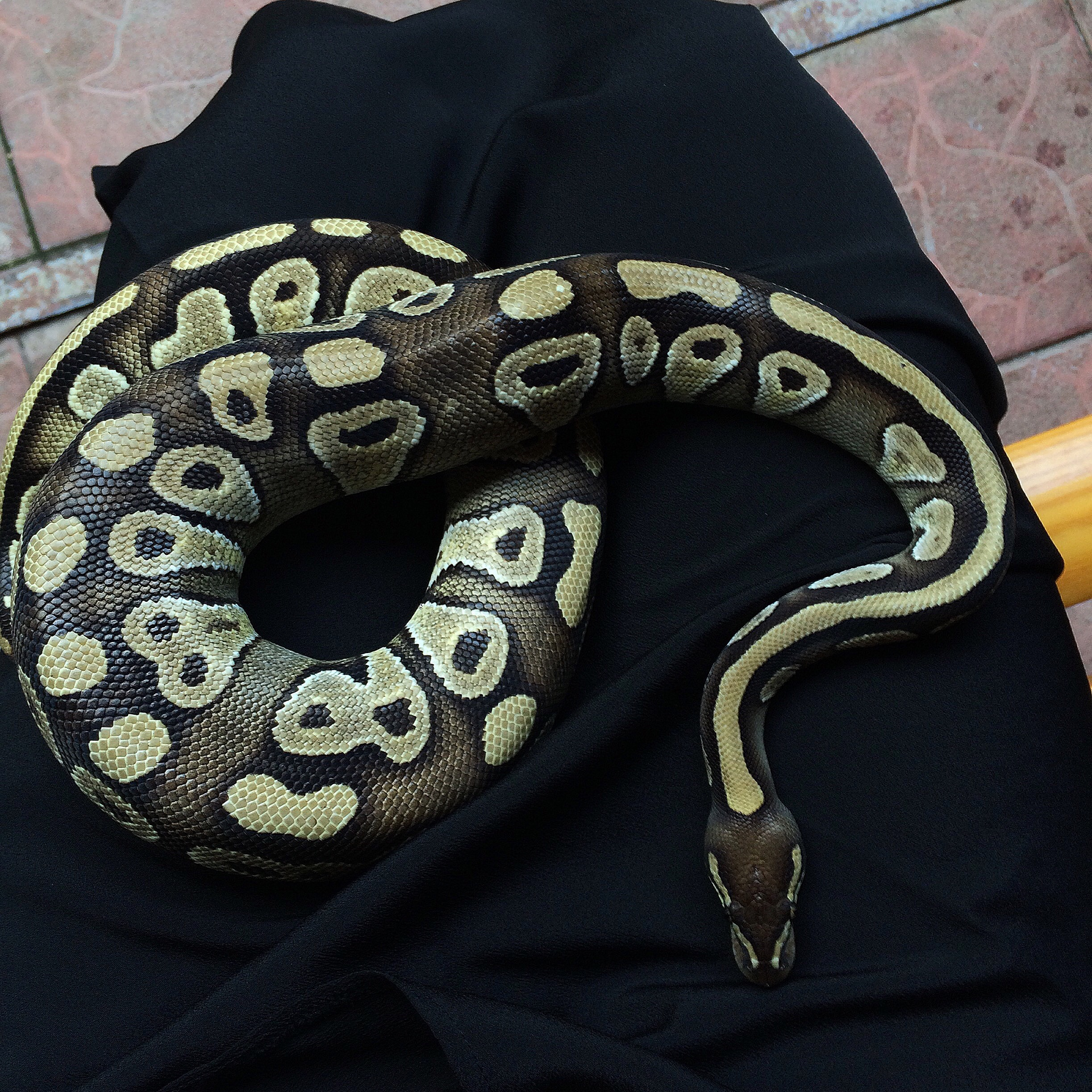 Serpent Medicine