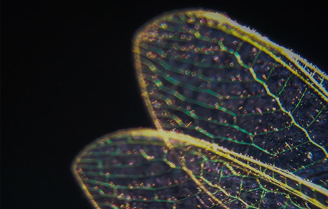 dragonfly totem animal spirit